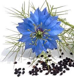 http://mycosmetik.fr/img/cms/hv/huile-vegetale-nigelle.jpg